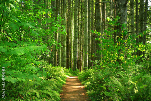 Foto op Canvas Groene a picture of an Pacific Northwest forest trail