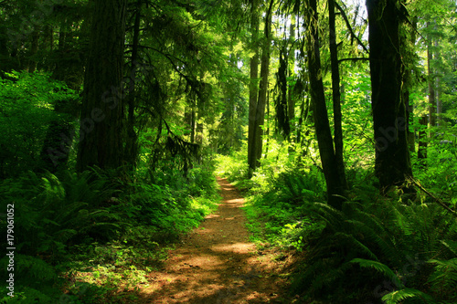 Fotobehang Groene a picture of an Pacific Northwest forest trail