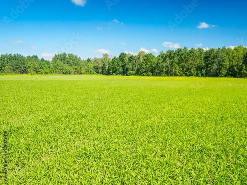 Fotobehang Lime groen Green Field In Summer