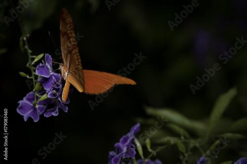 Fotobehang Vlinder butterfly_1