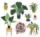 Potted  house plants isolated on the white background. Vector illustration with stylish lettering - My little garden. - 179102877