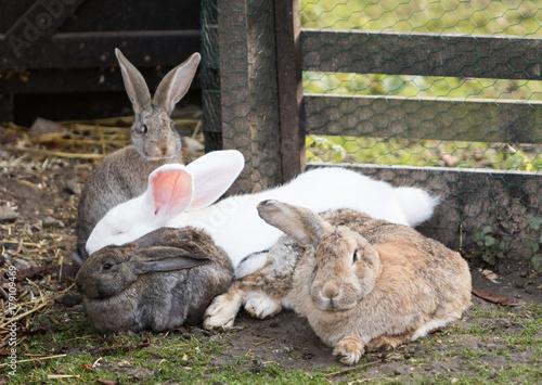 Poster Hasen und Kaninchen
