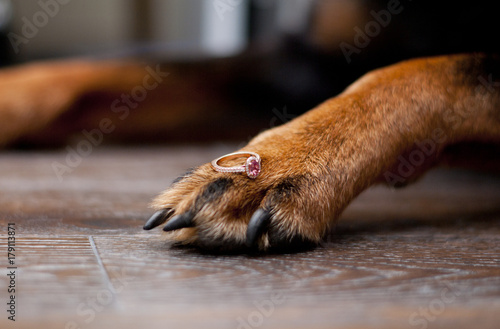 Dog paw with pink sapphire engagement ring Poster