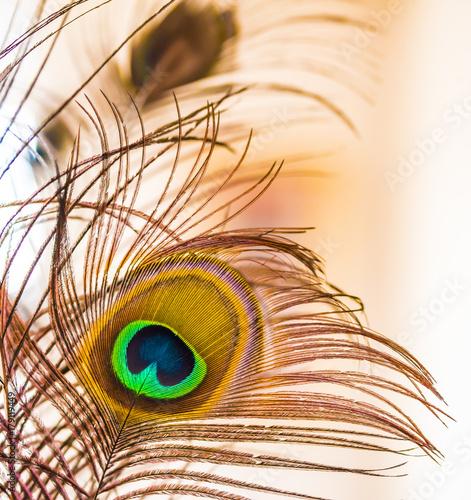 Fotobehang Pauw Fantasias de colores en multitud de tonos y composiciones con plumas de pavo real