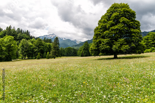 Foto op Canvas Pistache Bavarian Meadow