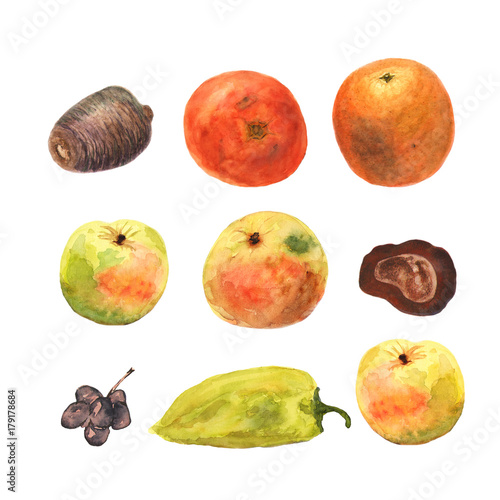 Watercolor hand drawn fruits and vegetables. Eco food background. Healthy eating. Apples, orange, tomato, pepper, grape, chestnut, cone - 179178684