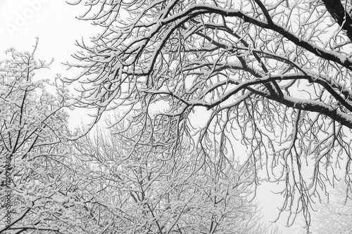 Foto op Plexiglas Kiev Winter mood: Tree branches covered with heavy snow