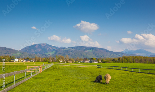 Foto op Plexiglas Gras Green Pasture at the Base of the Alps in Austria
