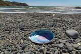 Abalone / Paua Shell On New Zealand Beach  - 179200451