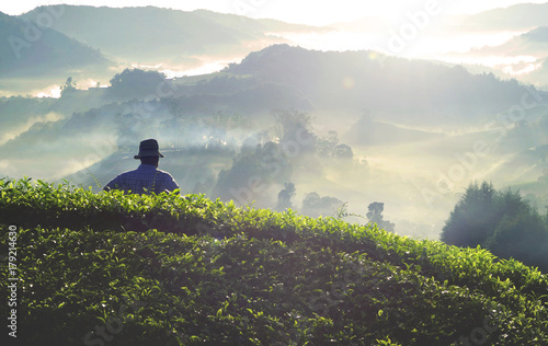 Papiers peints Beige Farmer at tea plantation in Malaysia.