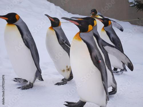 Fotobehang Pinguin ペンギンのお散歩