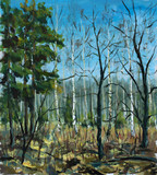 Original oil painting Spring forest. Green trees, blue sky, shadows on ground. Beautiful  landscape. Modern impressionism painting art.