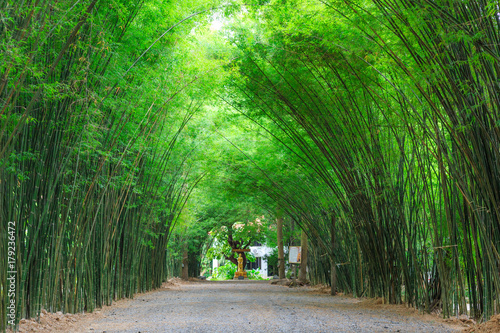 Poster Groene Arbor bamboo forest that occurs naturally in Chulabhorn wanaram Temple, The famous place at Nakhon Nayok province
