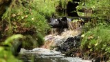 waterfall, pure cold water stream, forest landscape