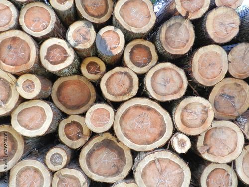 Papiers peints Texture de bois de chauffage 木材 年輪 切り口