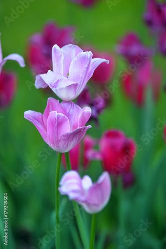 Fotobehang Groene flower