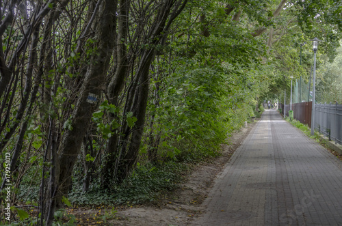 Aluminium Weg in bos Aleja przy lesie