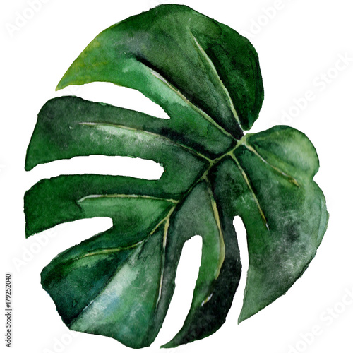 Tropical Hawaii leaves in a watercolor style isolated. Aquarelle wild flower for background, texture, wrapper pattern, frame or border. - 179252040