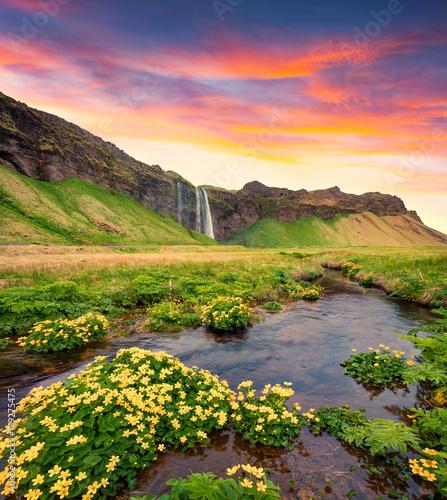Spectacular morning view of Seljalandfoss Waterfall on Seljalandsa river. - 179275475