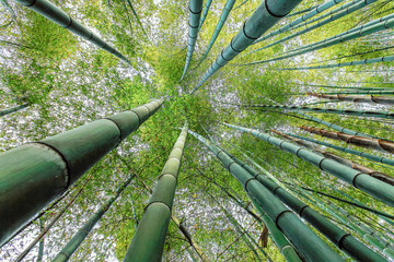 look up in green bamboo forest