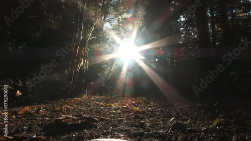 Time lapse in autumn forest of sun setting behind trees, transitioning to dark.