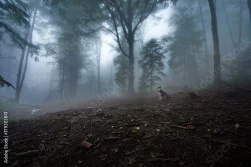 Fotobehang Betoverde Bos foggy forest