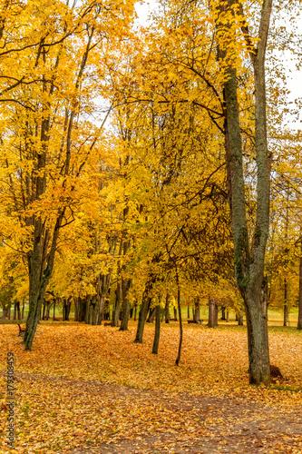 Fotobehang Oranje In the autumn park