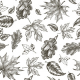 Decorative seamless pattern with Ink hand drawn autumn maple and oak leaves. Botanical elements texture for your design. Vector illustration. - 179317665