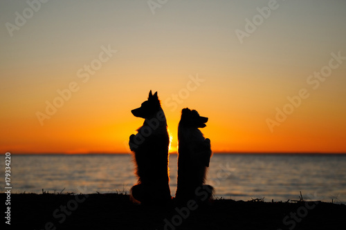Aluminium Strand Two dogs at sunset