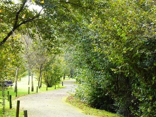 Foto op Plexiglas Weg in bos Paseo fluvial