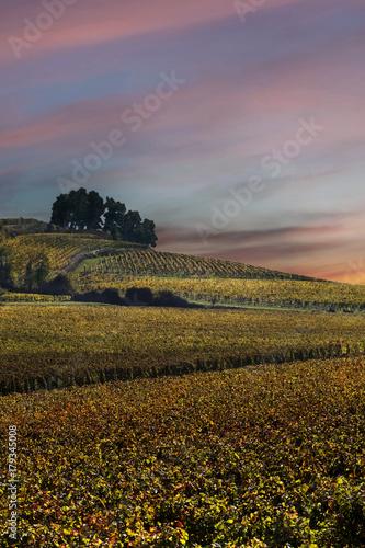 Fotobehang Wijngaard Landscape of vineyards