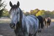 Grey paint horse - 179360877