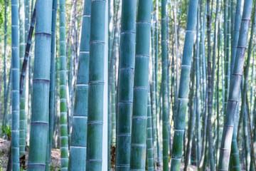 bamboo woods background