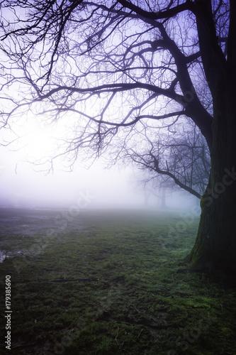 Fotobehang Aubergine fog