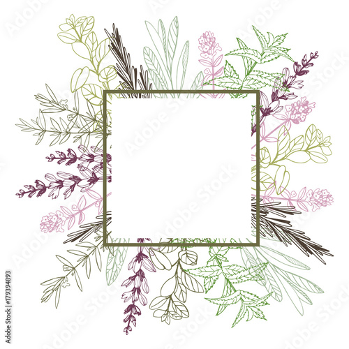 Vector frame with hand drawn herbs. Sketch illustration.