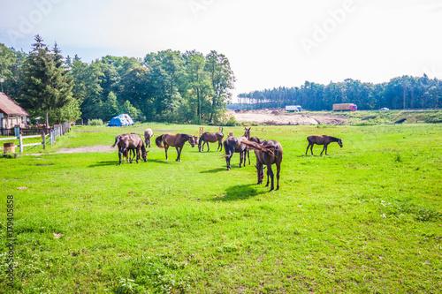 Fotobehang Lime groen Horse in field landscape.