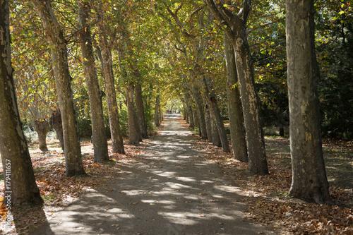 Foto op Plexiglas Weg in bos Paseo entre los árboles teñidos de otoño