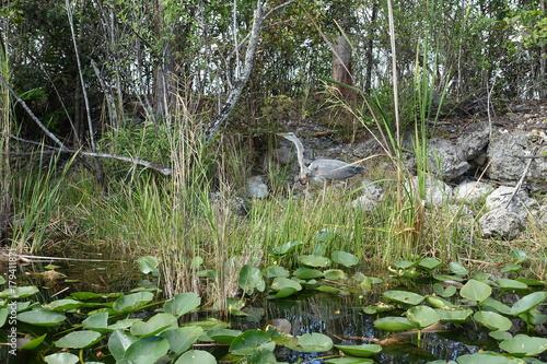 Papiers peints Olive Florida Everglades Holiday Park