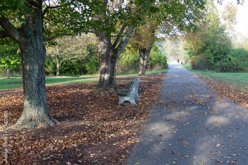 Papiers peints Route dans la forêt The empty park bench under the autumn tree.