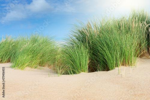 Foto op Plexiglas Pistache cordon dunaire et ses oyats