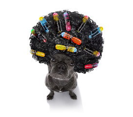 bad hairdo on dogs
