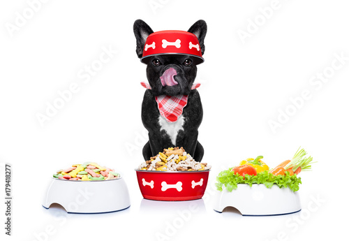 Fotobehang Crazy dog hungry dog with food bowls