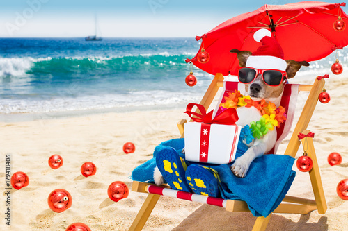 Fotobehang Crazy dog dog in hammock as santa claus on christmas at the beach