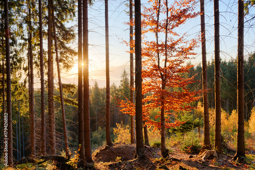 Papiers peints Automne Sunrise in the mountain forest