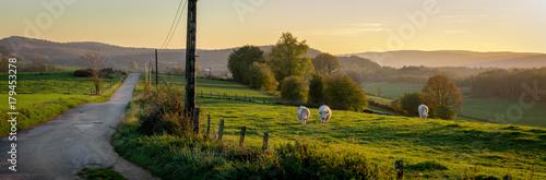 Sticker Un panorama sur une route de campagne au coucher de soleil, avec des vaches dans un prés