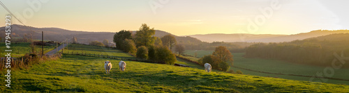 Poster Panoramafoto s panorama d'un coucher de soleil sur la campagne avec des vaches dans un pré et des montagnes au fond