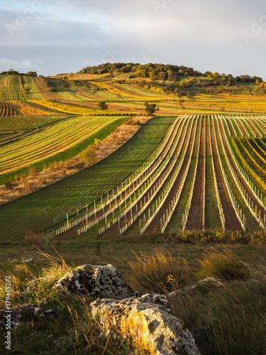 Fotobehang Wijngaard Weingärten am Goldberg im Herbst