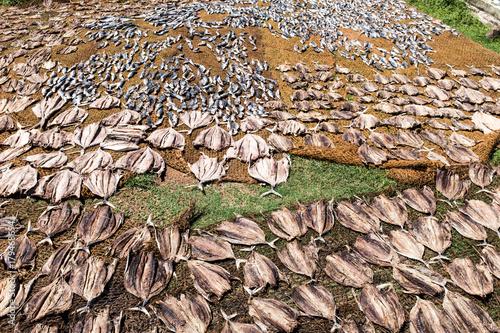 Papiers peints Texture de bois de chauffage Sri Lanka