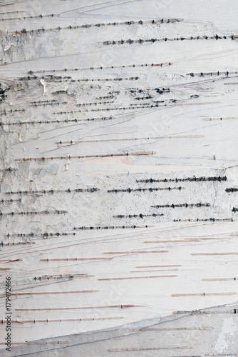 Paper Birch Bark Background - 179472466