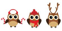 Fun Owls Sticker